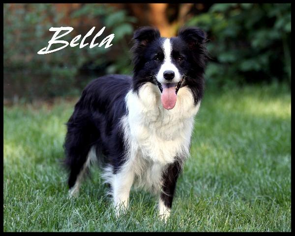 Bellapic-600x479.jpg