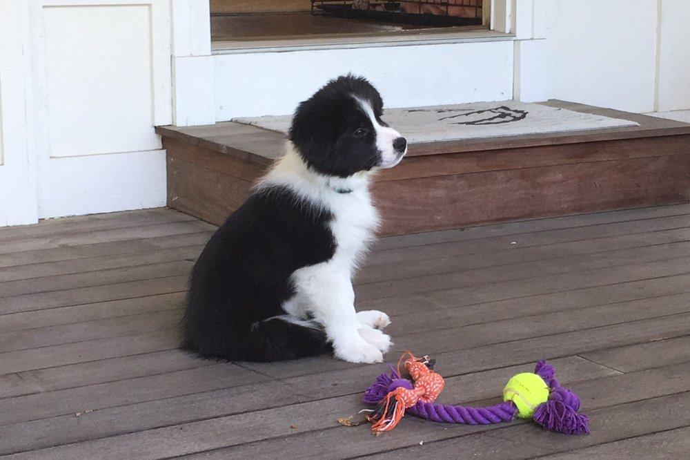 Ralphie - 10 weeks