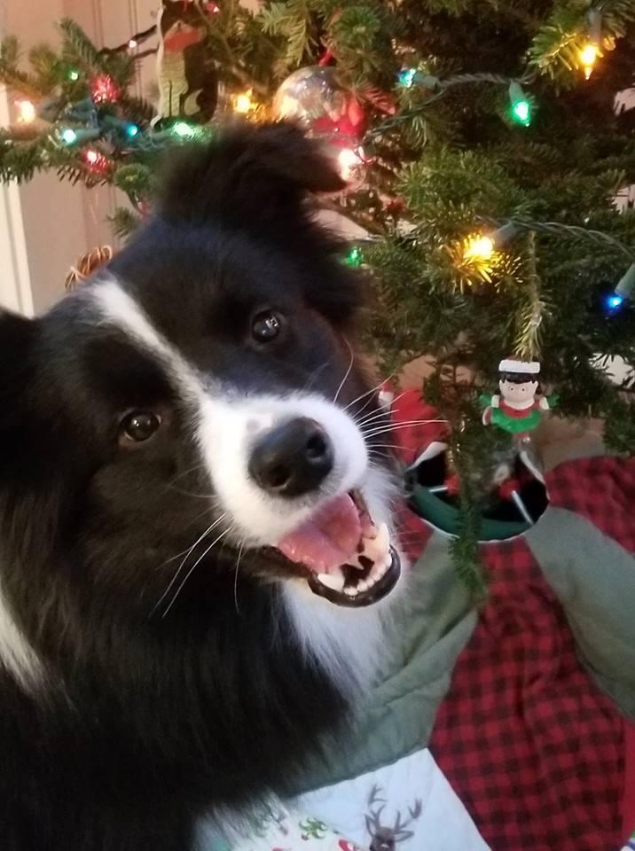 Merry Christmas GEO!