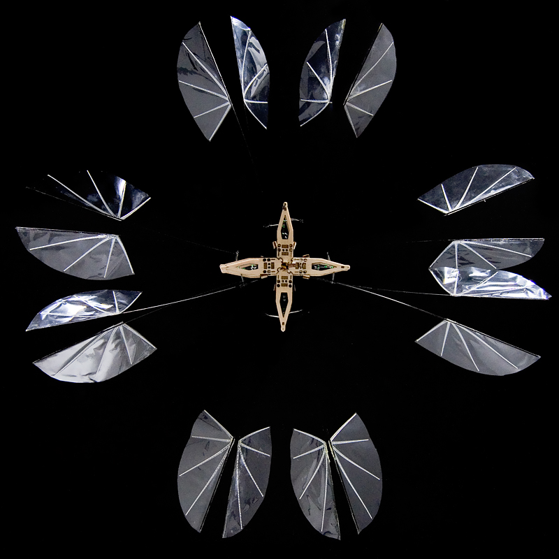 Strobe-light illuminated image showing both the inward and outward wing strokes of this 8-winged flapping hovering MAV (2008).