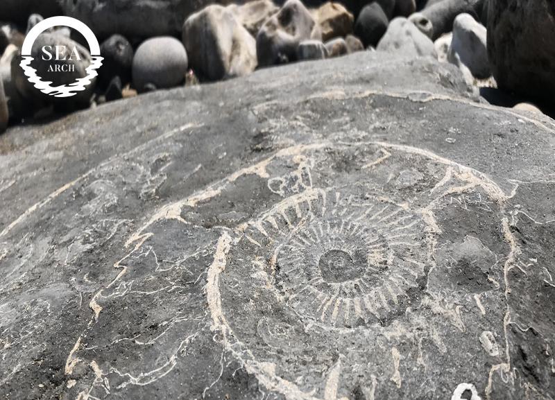 Sea_Arch_Fossils.jpg
