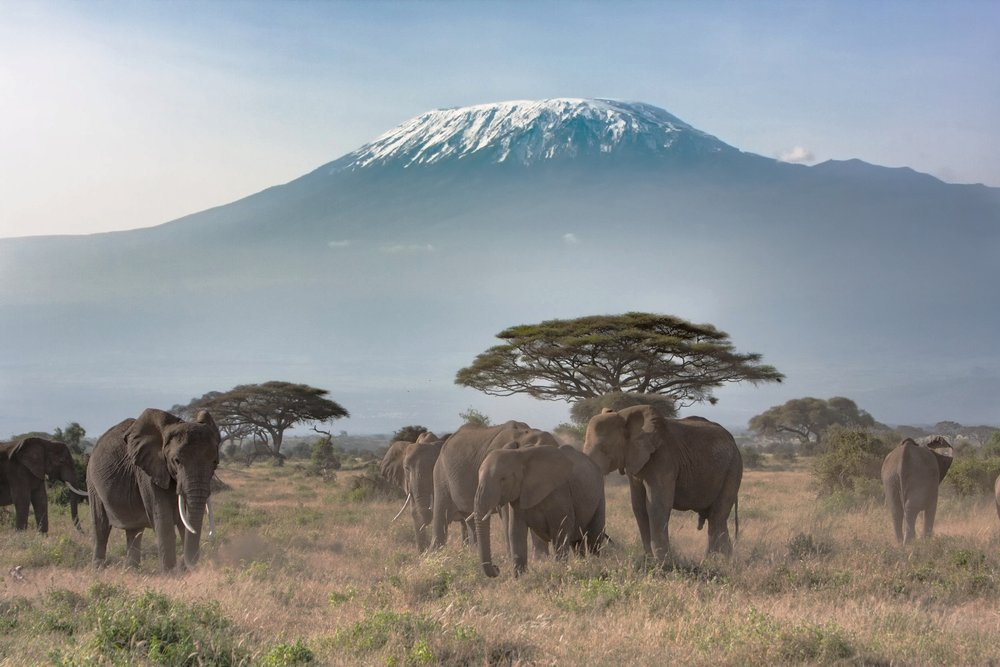 Trekking Adventures - Four routes, same destination: Africa's most fabled mountain.