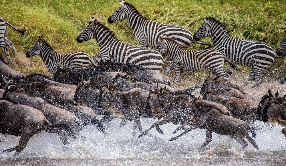 Great Migration River Crossings - 9 days, 8 nightsLuxury Safari