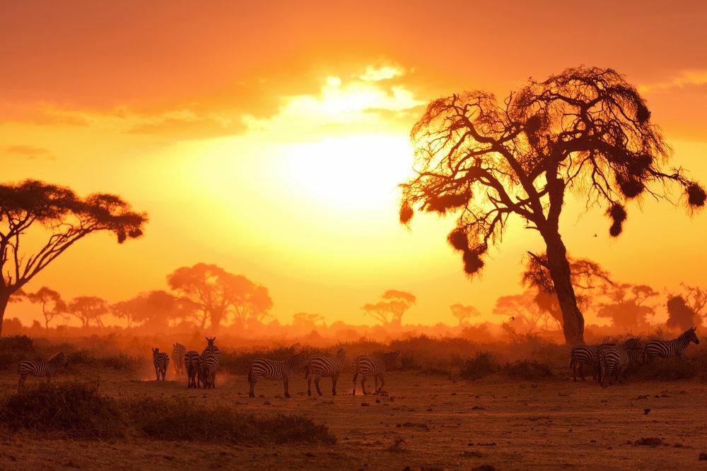 The Ultimate Safari Experience - 10 days, 9 nightsLuxury Safari