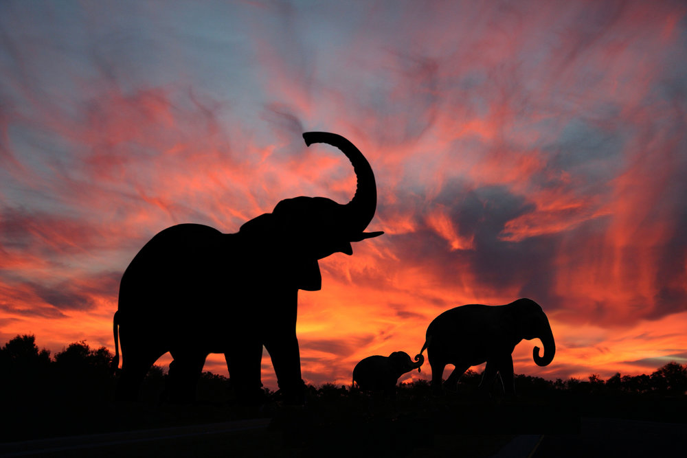 The Best of Two Countries - 9 days, 8 nightsMid-range Safari