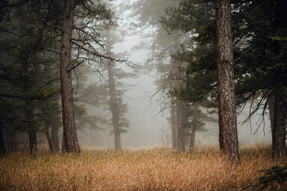 Candice Rawlin Wedding PHOCO Photography Pines Genesee Golden Colorado Fog -22.jpg