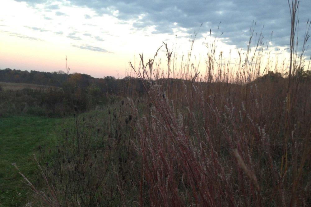 grasses_02.jpg