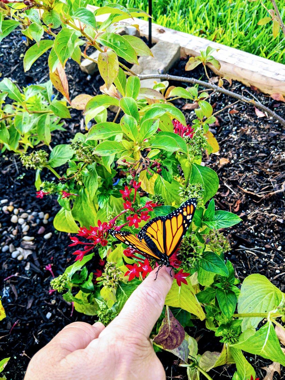 Butterfly 09:18.jpg