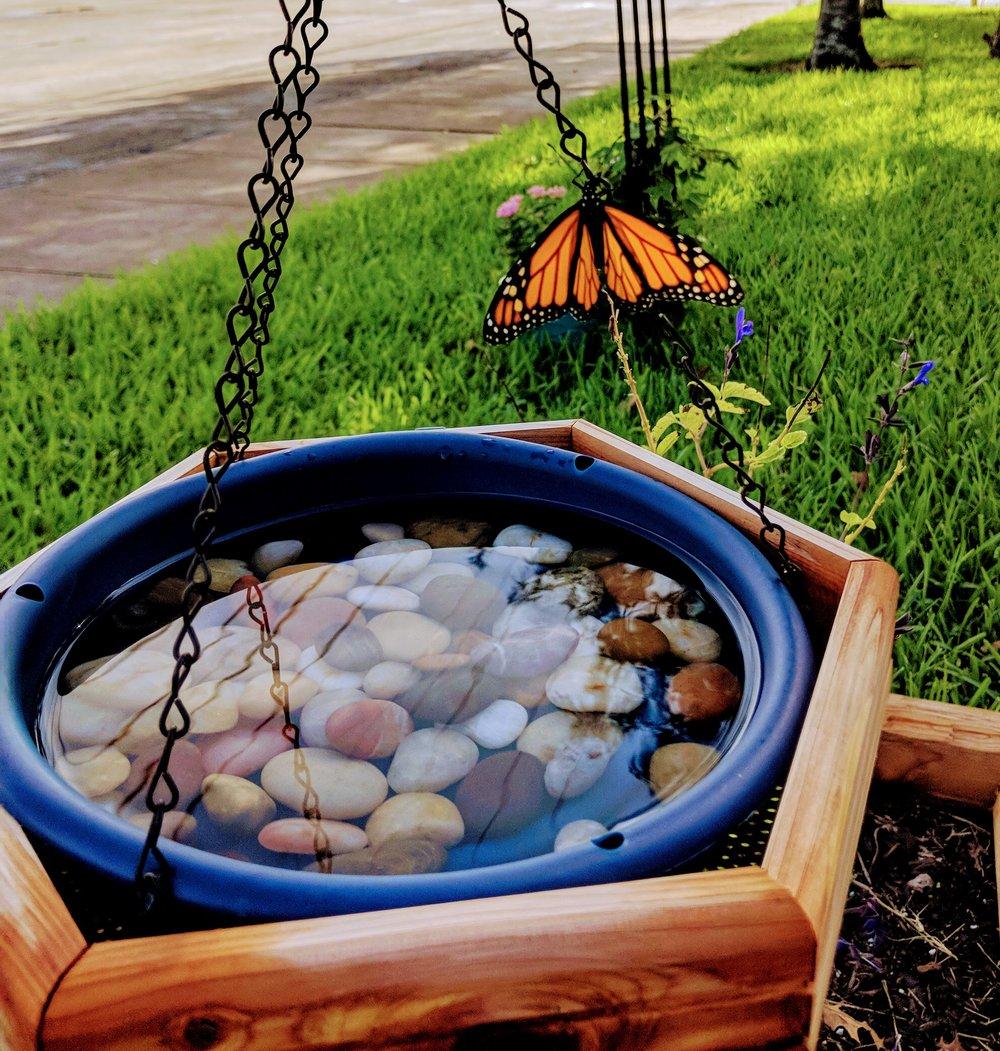 Butterfly3-09:18.jpg