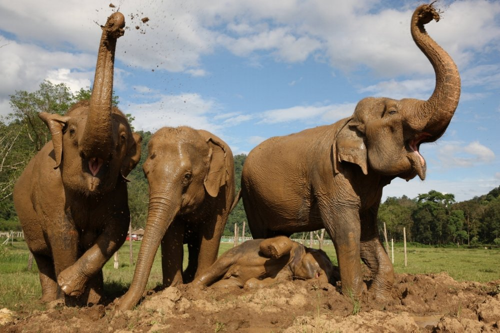 - You've made us as happy as elephants playing in mud!Together, we are making a difference in global conservation efforts and in the lives of animals all over the world.Look for an email confirmation of your tax-deductible gift soon.Thanks again!