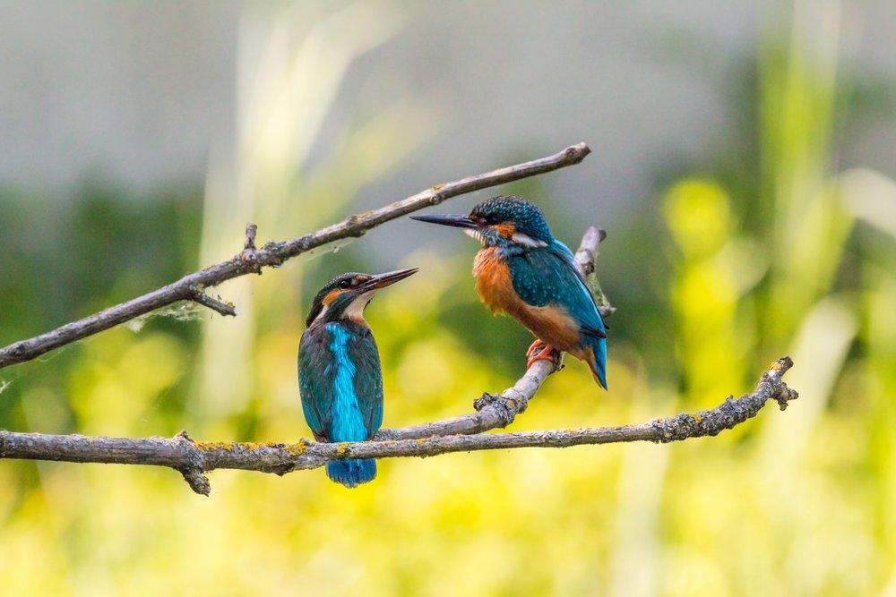 animals-avian-birds-459326.jpg