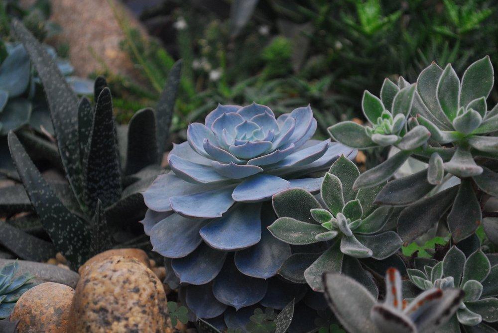 10. Succulents