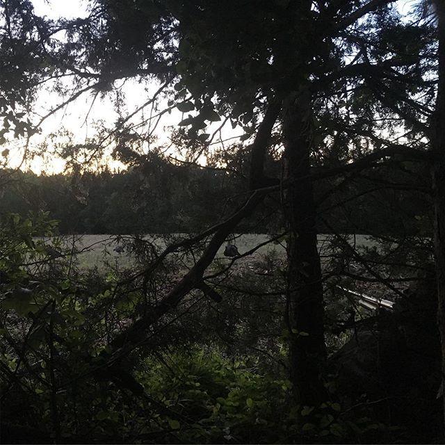 The 2019 #vaoneshot is underway. First pic in. More to come in our story.  #thevawildlife ⠀⠀⠀⠀⠀⠀⠀⠀ •⠀⠀⠀⠀⠀⠀⠀⠀⠀ •⠀⠀⠀⠀⠀⠀⠀⠀⠀ •⠀⠀⠀⠀⠀⠀⠀⠀⠀ •⠀⠀⠀⠀⠀⠀⠀⠀⠀ •⠀⠀⠀⠀⠀⠀⠀⠀⠀ •⠀⠀⠀⠀⠀⠀⠀⠀⠀ #virginiawildlife #vawildlife #huntva #fishva #loveva #publiclandhunting #publiclands #publiclandowner #deerhunting #turkeyhunting #vaturkey #duckhunting #goosehunting #waterfowlhunting #dovehunt #celebratethehunt #hunting #outdoors #biggamehunting #vaoutdoors #virginiaoutdoors⠀⠀⠀⠀⠀⠀⠀⠀⠀ #naturalvirginia #wildlifeconservation #huntinggame⠀⠀⠀⠀⠀⠀⠀⠀⠀ #whatgetsyououtdoors #itsinmynature⠀⠀⠀⠀⠀⠀⠀⠀⠀ #vaoneshot #waterfowlhunting #duckhunting ⠀⠀⠀⠀⠀⠀⠀⠀⠀ #raisedhunting #huntingheritage