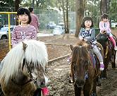 pony_4436s.jpg