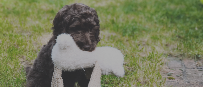 """Ashley has worked wonders with our 3 year old cockapoo Jackson. She is professional yet friendly and has a great approach to training. Our entire family, children too, were included in the sessions and it has made a world of difference in our household. He is a calmer, better behaved dog because of her. I would highly recommend Ashley.""  -    Stephanie (and Jackson)"