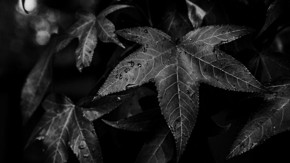 © Russell Brammer