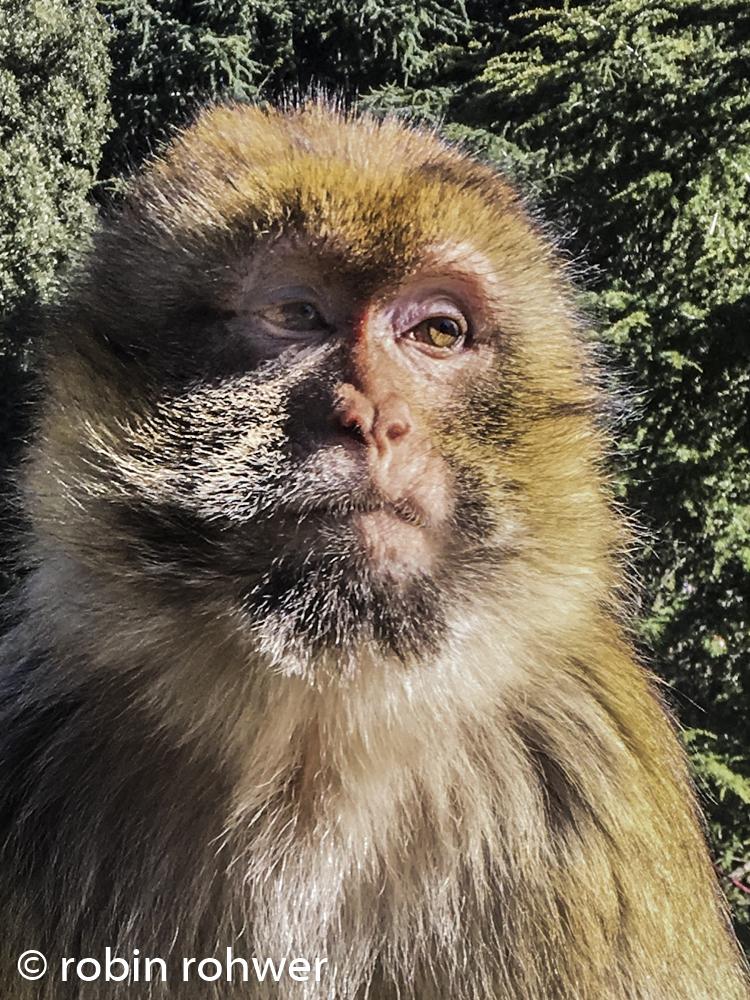 monkey see-1.jpg