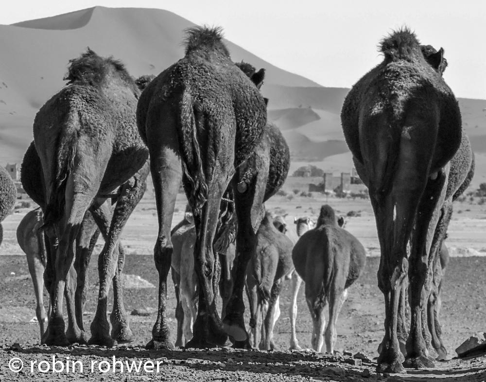 camel butt-1.jpg