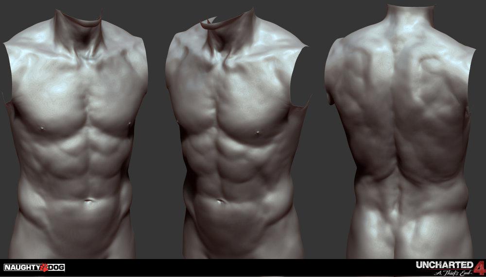 torso-01.jpg