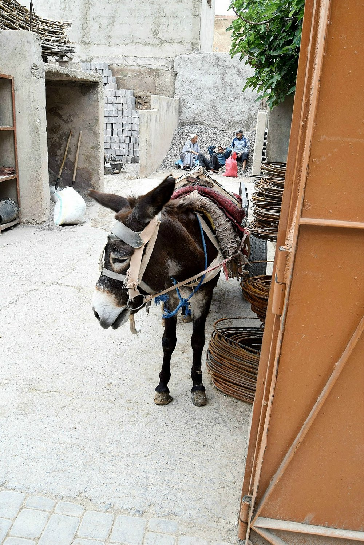UNSER ERSTER EINDRUCK - Marrakesch ist laut, unordentlich aber unheimlich sympathisch. Wir hatten noch am selben Abend das Gefühl bereits ein Teil der Stadt geworden zu sein. Wir lernten seine Eigenheiten und Besonderheiten schnell kennen und lieben. Stress kennt man hier nicht, zumindest nicht in der Medina.Die Stadt ist von einer ungemeinen Armut geprägt, was uns zu Beginn sehr geschockt hat. An jeder Ecke der Medina sitzen Bettler und streunende Katzen streifen durch die Straßen. Die Erwachsenen üben Berufe aus, die bei uns eher als reines Hobby gelten: sie verkaufen Brot und Obst oder schnitzen Figuren aus Holz. Für mich war es zu Beginn äußerst schwer hinzusehen. Gerade deshalb, da außerhalb der Medina eine derartige Dekadenz herrschte, dass mir fast übel wurde.Ich schämte mich für den Wohlstand, der in Österreich schier zur Normalität geworden ist. Schnell habe ich aber bemerkt, dass kaum jemand der Einheimischen traurig über das einfache Leben hier ist. Überall sahen wir Kinder gemeinsam spielen und lachen. Die Arbeitenden erzählen einander Geschichten und hatten ebenfalls sichtlich Spaß. Und der Glaube schwebt über der ganzen Stadt, vor allem dann, wenn der Muezzin wieder einmal vom Turm der Moschee Allahu akbar schreit und die ganze Stadt in Stille versinkt.Und auch wenn der Stadt das Geld für Restaurationen sämtlicher Gebäude fehlen mag, beeindruckten uns die prunkvollen Bauten von der ersten Minute an. Die Stadt wirkt unglaublich lebendig und wir merkten schnell, dass uns die Hektik des europäischen Alltags keineswegs fehlte.