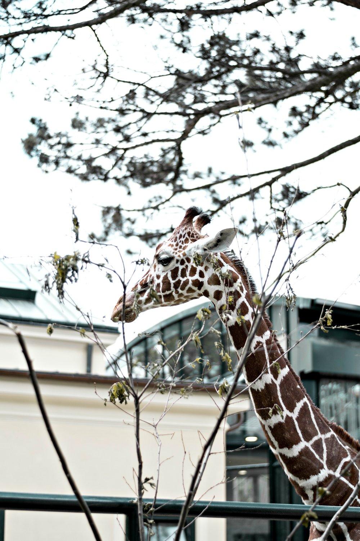 auch deshalb lohnt sich ein Besuch - Aber auch Elefanten, Giraffen & Co haben mir wieder gezeigt, dass Schönbrunn definitiv zu den schönsten Tiergärten weltweit gehört.Was mir besonders gefällt? Sein Einsatz für gefährdete Tiere und die zahlreichen Projekte zum Schutz von Flora und Fauna.