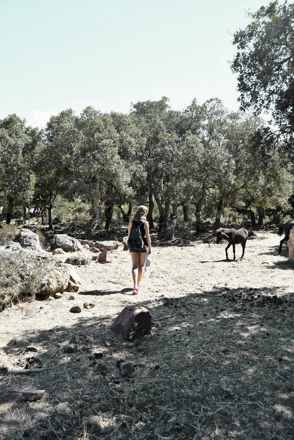 Giara di Gesturi – Wanderung mit Wildpferden - Pferde gehören normalerweise nicht zu meinen Lieblingstieren, genauso wenig kann ich mich für lange Wanderungen begeistern. Dieser Ausflug bedeutete jedoch beides: eine 12km lange Wanderung auf einer 550m hoch gelegenen Basalthochfläche,wo freilebende Wildpferde grasen, die hier zu Hause sind.