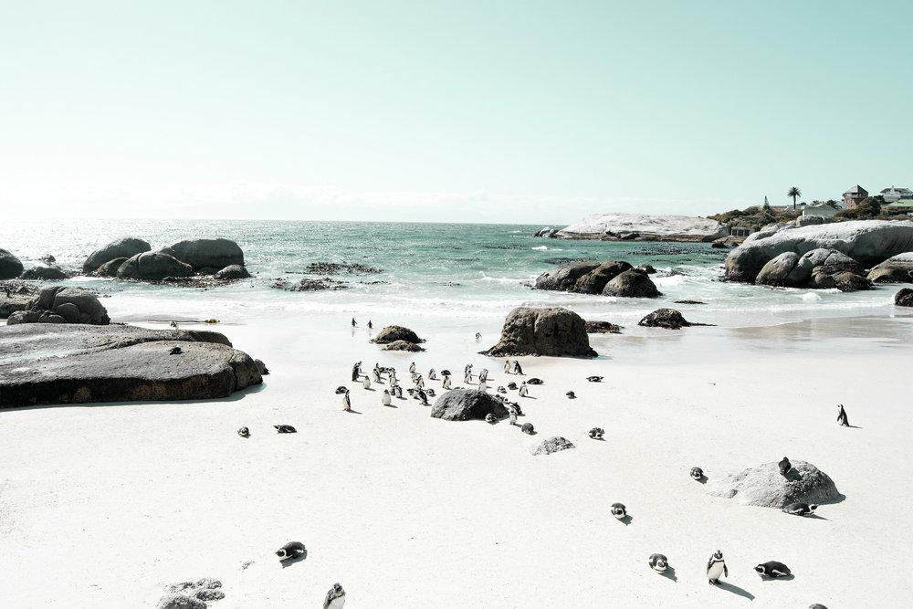 Boulders-Beach-Pinguine-Kapstadt-3
