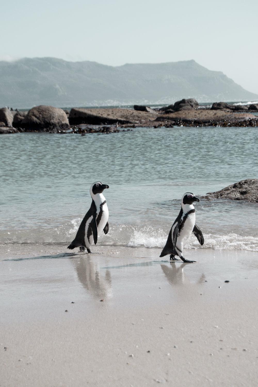 Respektvoller Umgang - Ein Wärter gibt Acht, dass respektvoll mit den Tieren umgegangen und auf ihre Privatsphäre, besonders in der Brutzeit, geachtet wird. Die Pinguine sind derart neugierig, dass sie sich wirklich bis auf wenige Zentimeter an mich herangetraut haben. Pures Glück beschreibt nicht mal annähernd was ich an diesem Tag gefühlt habe!