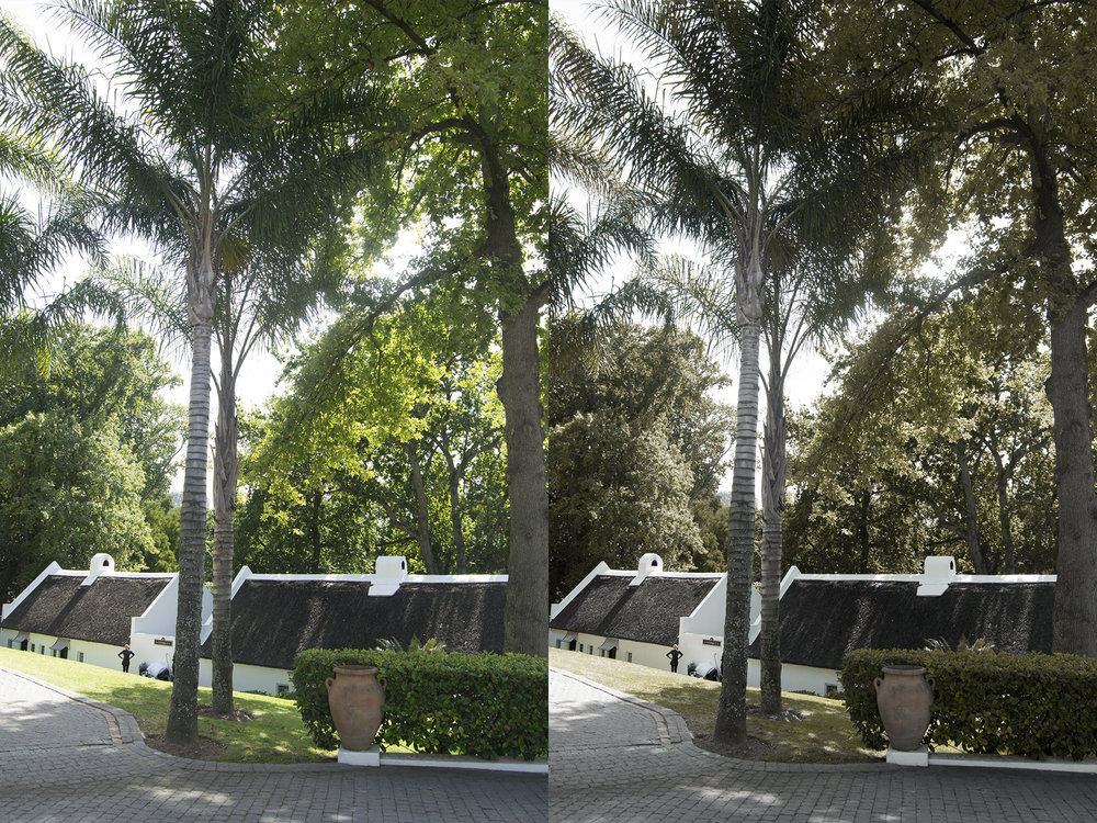 Lightroom-Preset-Palmtree.jpg