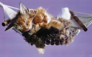 Sleeping-cuties-babies-pets-and-animals-18832477-1280-800