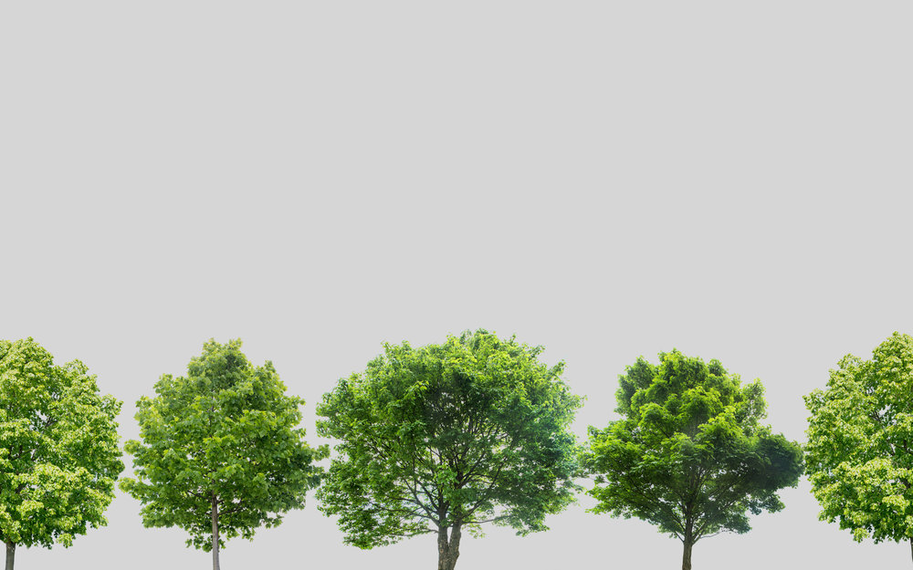 PLANT A TREE - A PORTION OF ALL ONLINE SALES SUPPORT REFORESTATION AND CARBON OFFSETTING