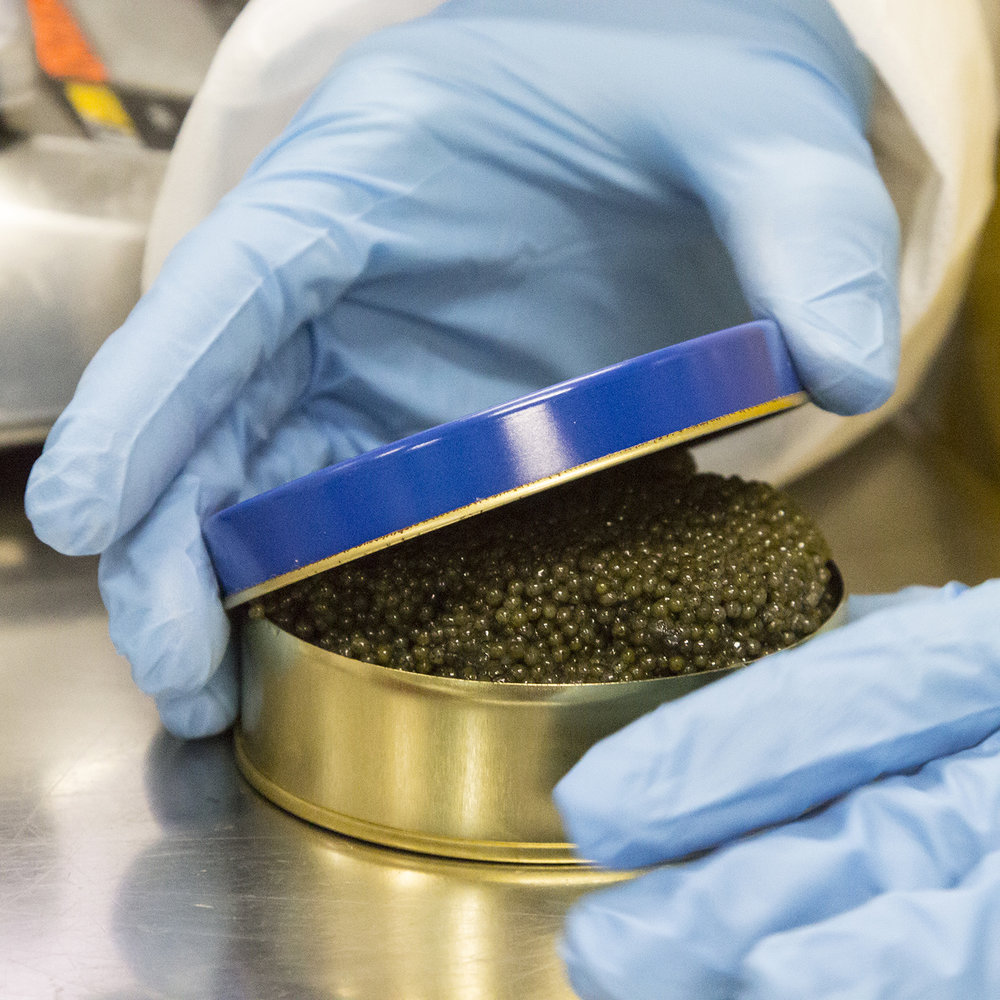 caviar-in-tin-gloved-hand.jpg