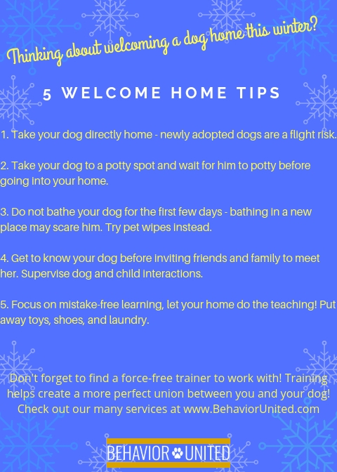 1. Take your dog directly home - newly adopted dogs are a flight risk.2. Take your dog to a potty spot and wait for him to potty before going into your home.3. Do not bathe your dog for the first few days - bathing.jpg