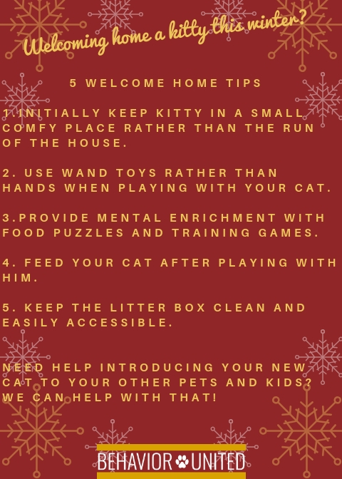 1. Take your dog directly home - newly adopted dogs are a flight risk.2. Take your dog to a potty spot and wait for him to potty before going into your home.3. Do not bathe your dog for the first few days - bat (1).jpg