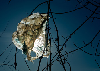 Stamford, CT trying to ban plastic bags