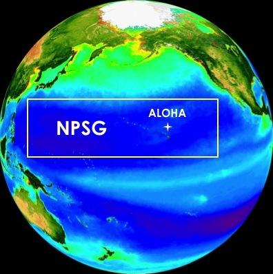 station-aloha.jpg