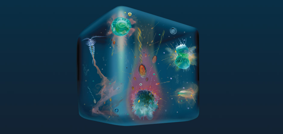 Marine Microbes in a Drop of Seawater