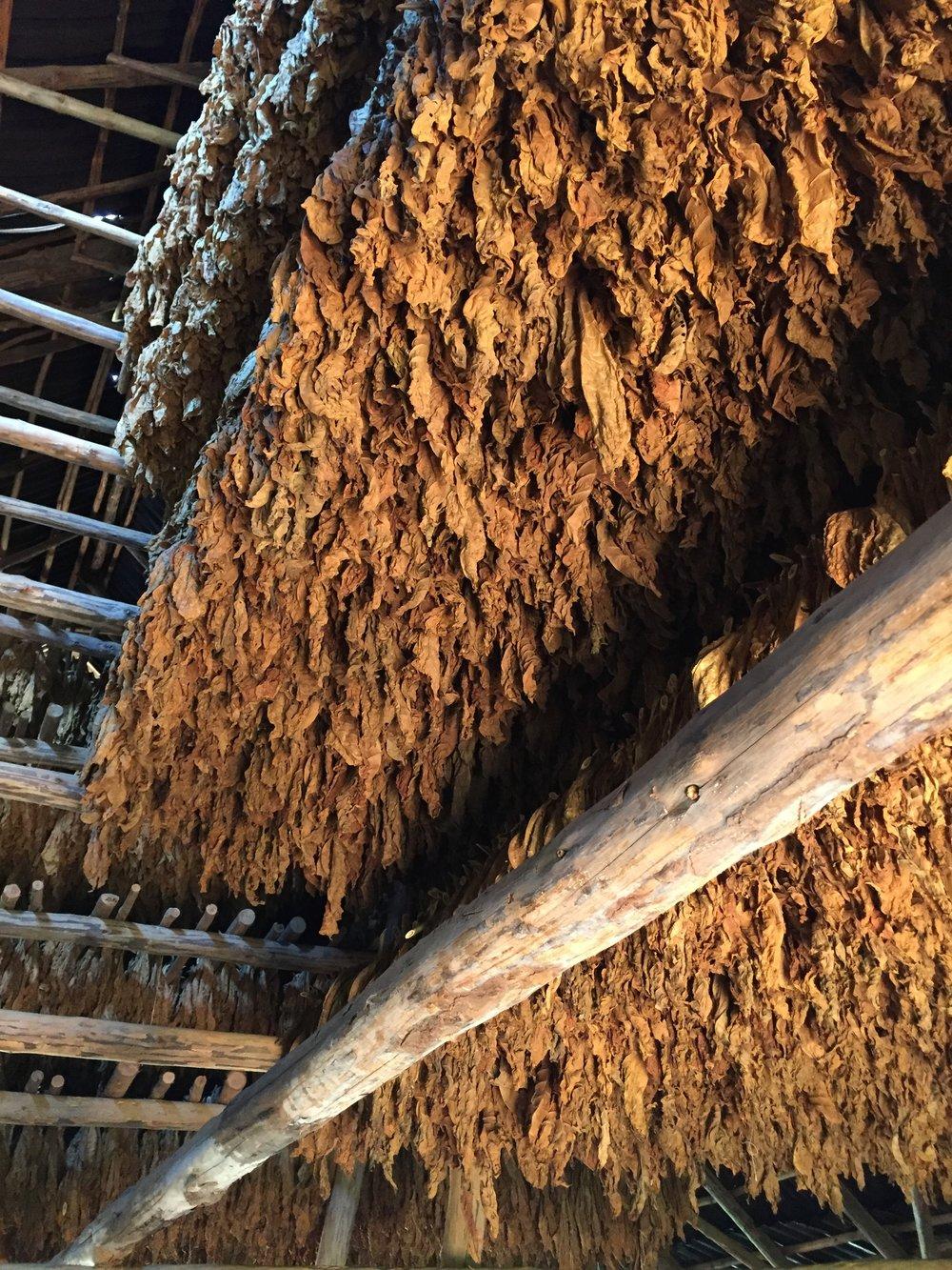 17 - Tabacco Farm.jpg