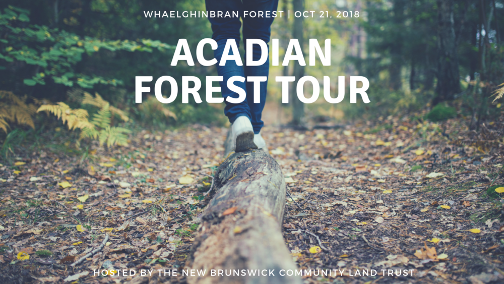 ACADIAN FOREST TOUR.png