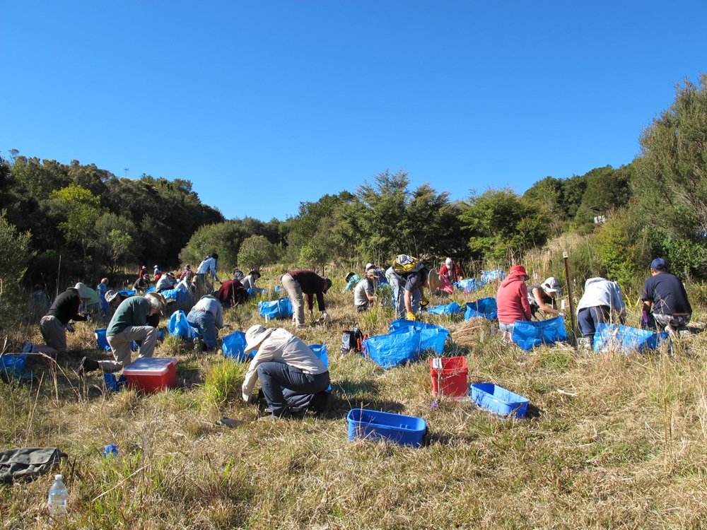 ARCS volunteers working to remove weeds that prevent natural regeneration of rainforest on the Springbrook Plateau in SE Queensland