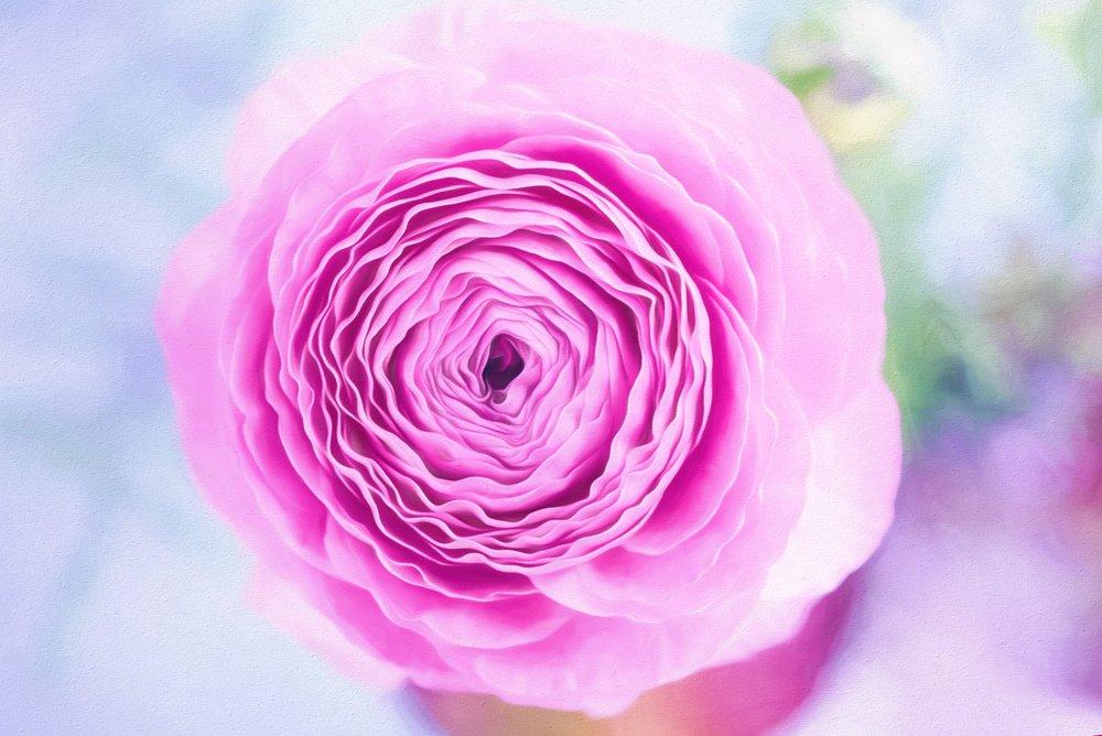 beautiful-bloom-blooming-272178.jpg