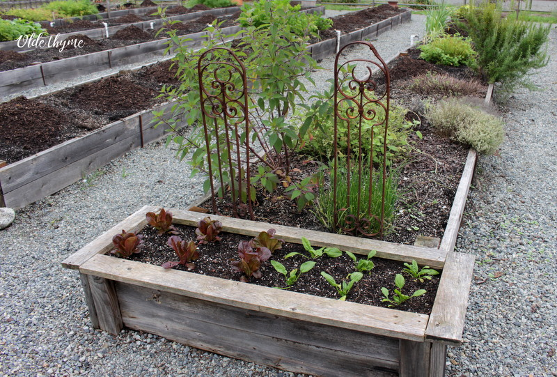 Top dress your beds with manure or compost for great vegetables next year.
