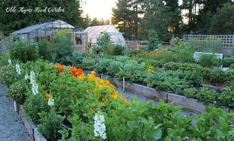 The kitchen garden at dusk. You can absolutely do this, too.