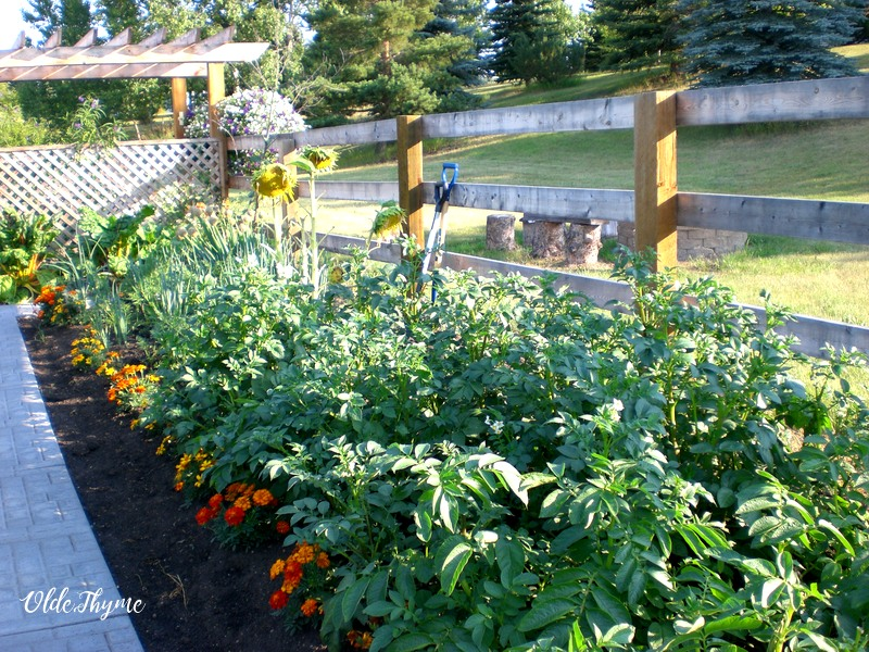 Raised beds do not need to have sides on them, they can simply be raised, low, flat and wide mounds with pathways in between.