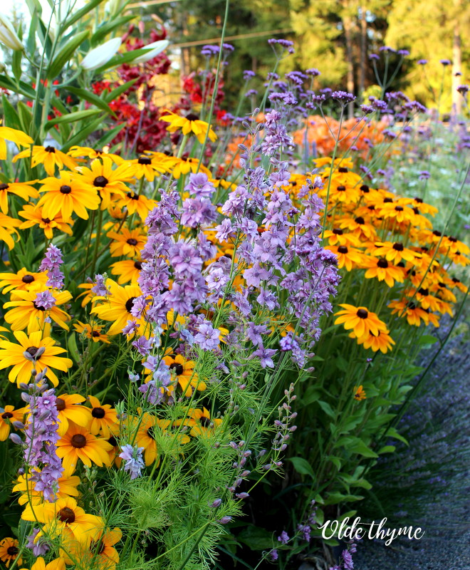 The summer time perennial bed inside the food garden. Lots of food for the bees, beneficial insects, and birds, too. Hummingbirds love this bed.