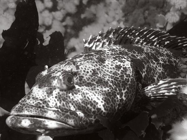 fish_ling.png