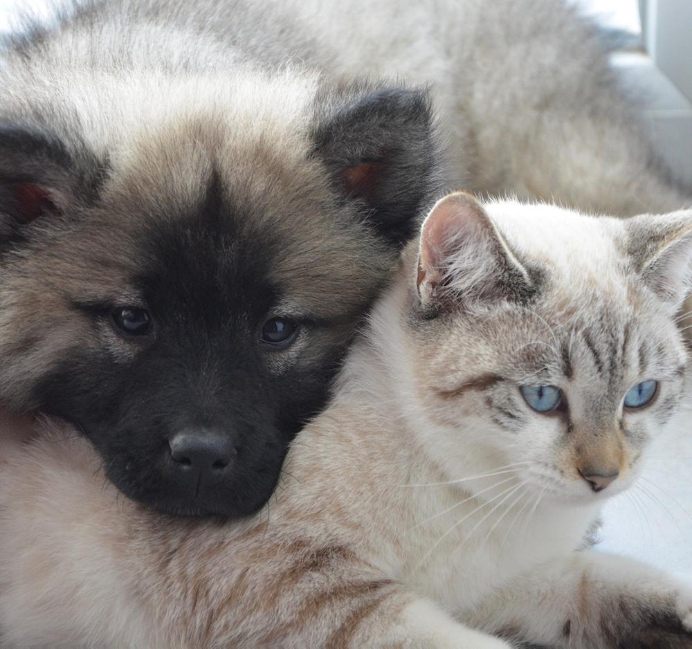 dog-cat cuddling.png