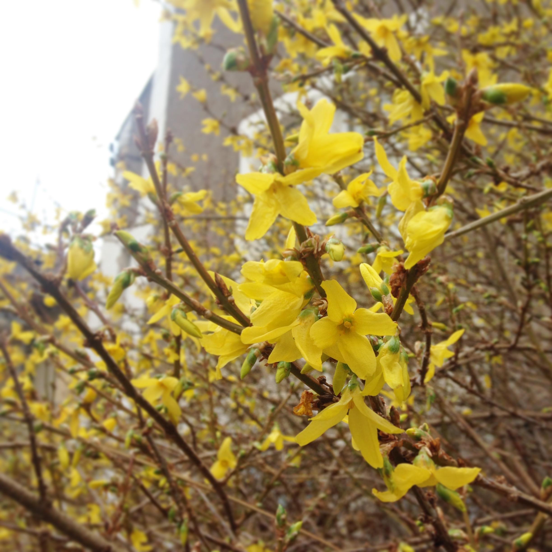 Blossom awakening
