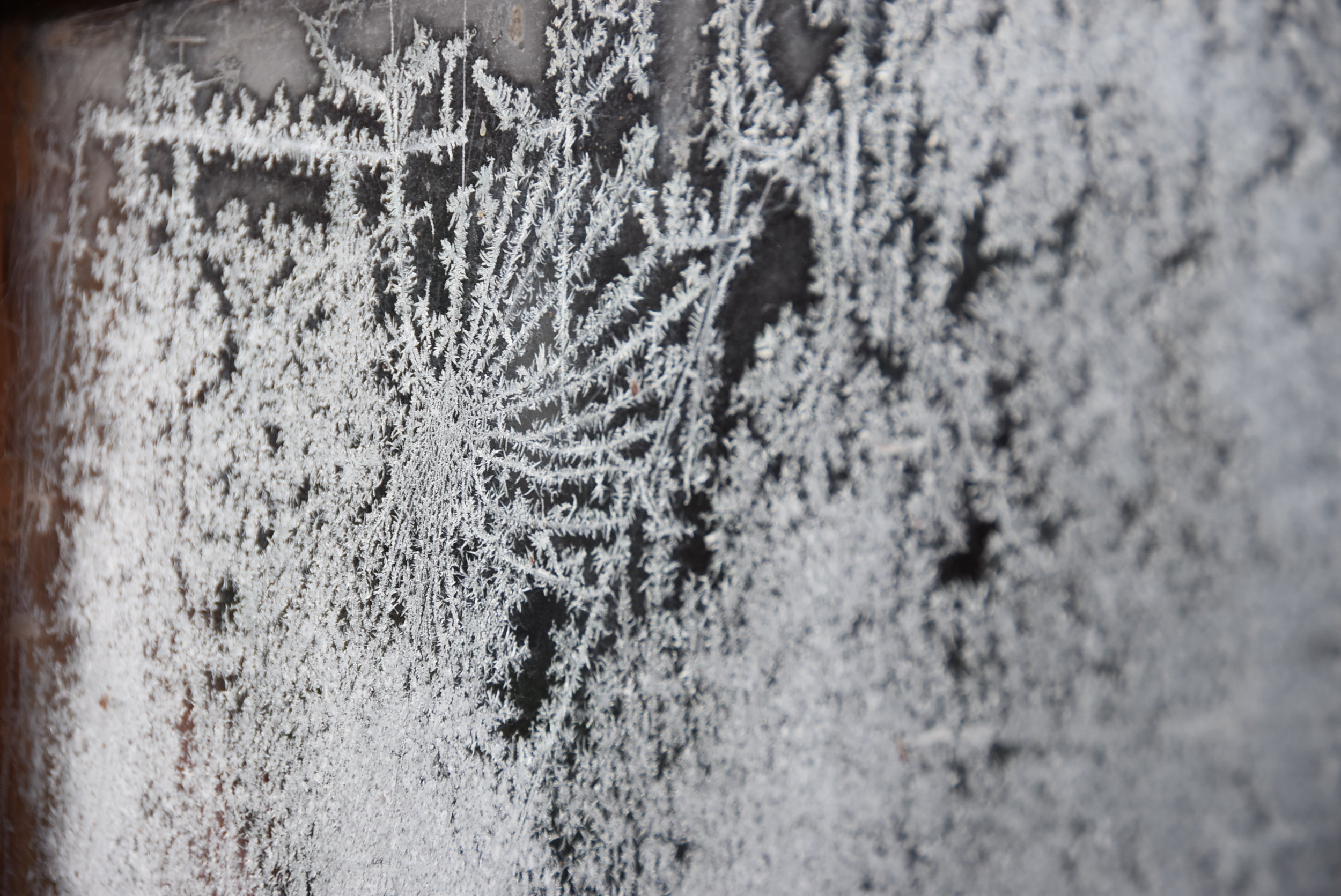 Spider web in the frost