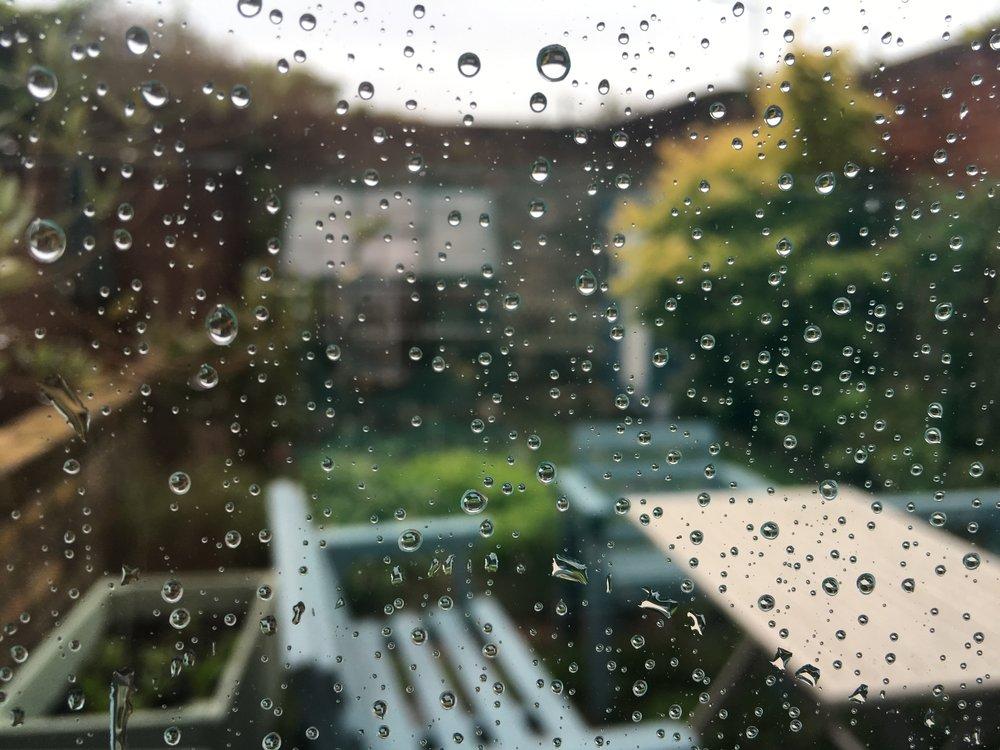 Our rainy urban garden